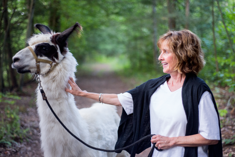 Walk with llamas in CT