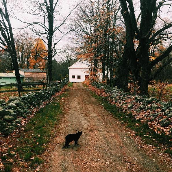 New England fall