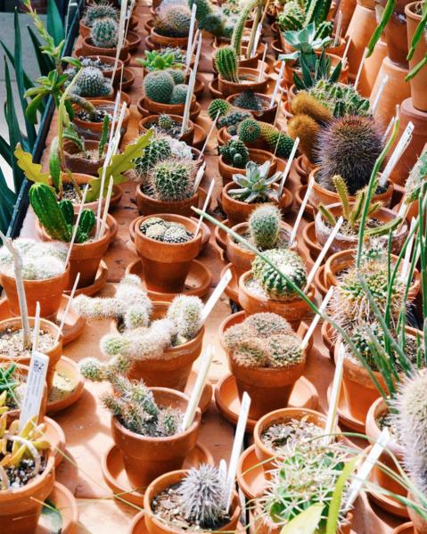 Cacti succulents botanical garden