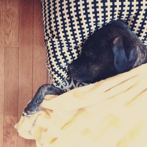 Sleeping Samson