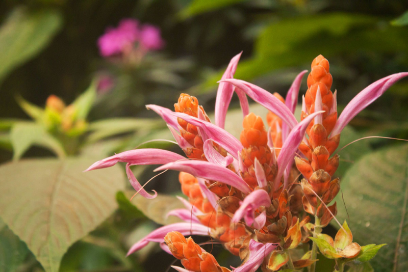Tropical flowers at the Biodome in Montreal