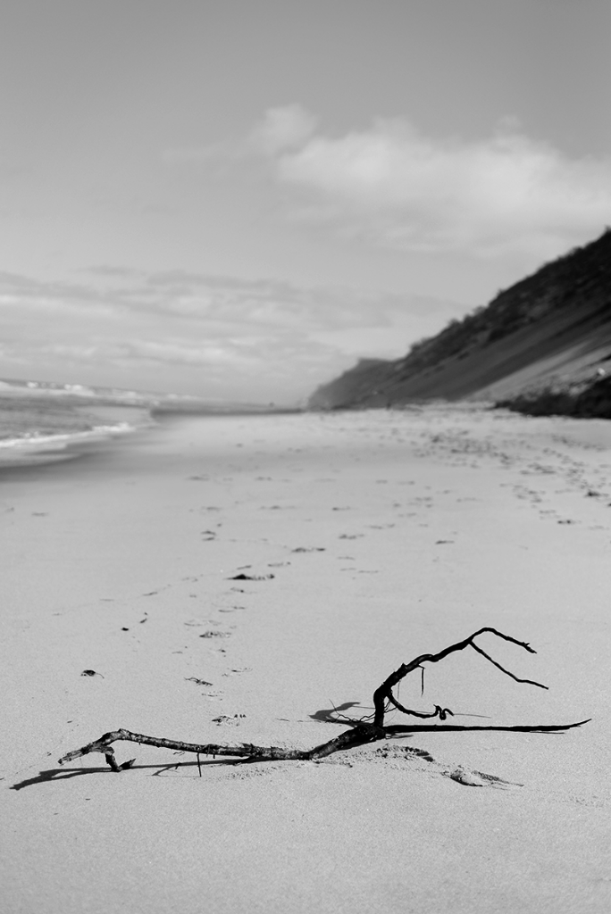 Black and white beach driftwood photograph
