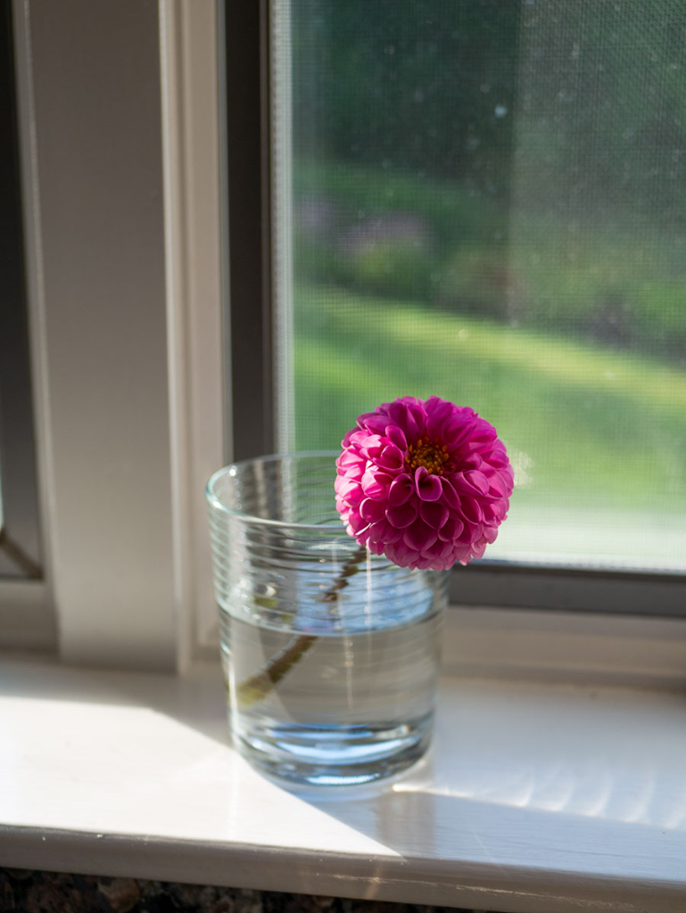 A flower in a glass