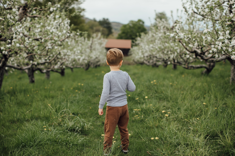 A toddler boy stands in an apple orchard. He is facing away from the camera.
