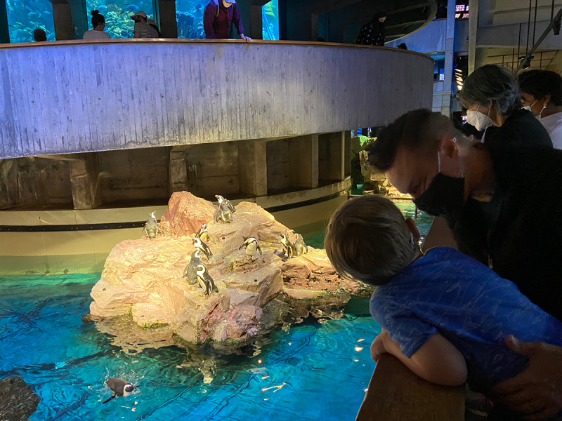 A toddler and grownup are leaning on the edge of the penguin enclosure at the New England Aquarium.
