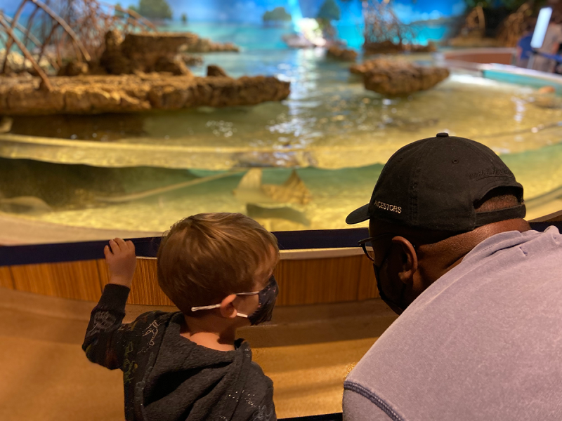 A toddler and grown up crouch over a tank of stingrays at the New England Aquarium. Both are wearing masks.